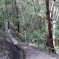 Gorge Discovery Circuit, Springwood